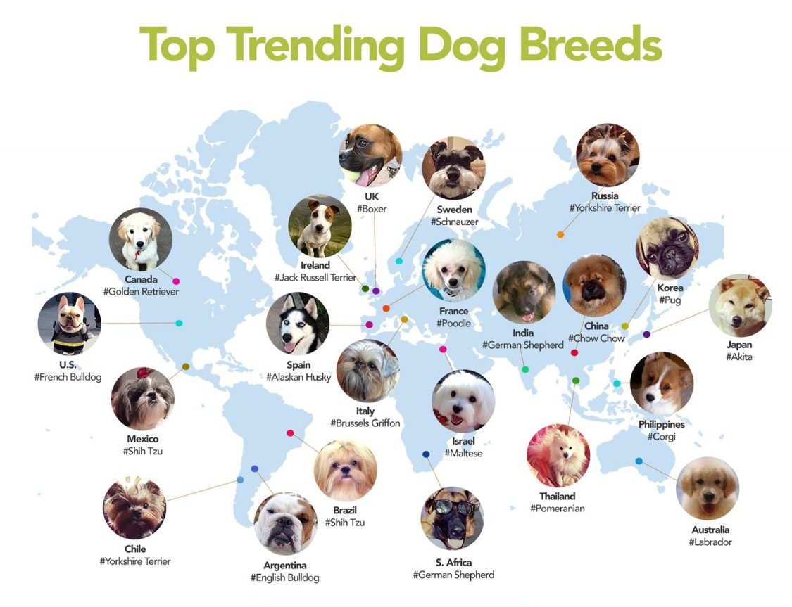 pet-internet-trends-2014 | Who's the Top Dog in your country?