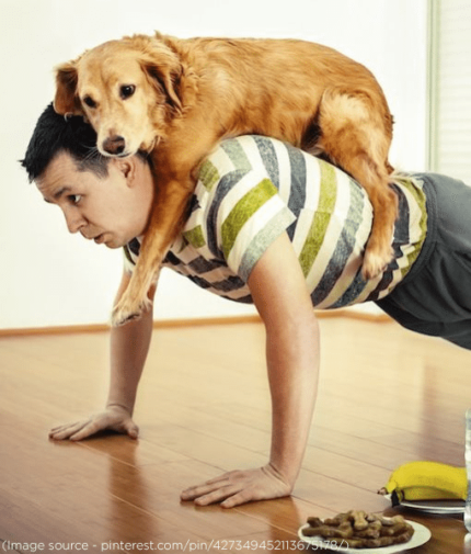 Make your pooch your fitness partner _ FitBark