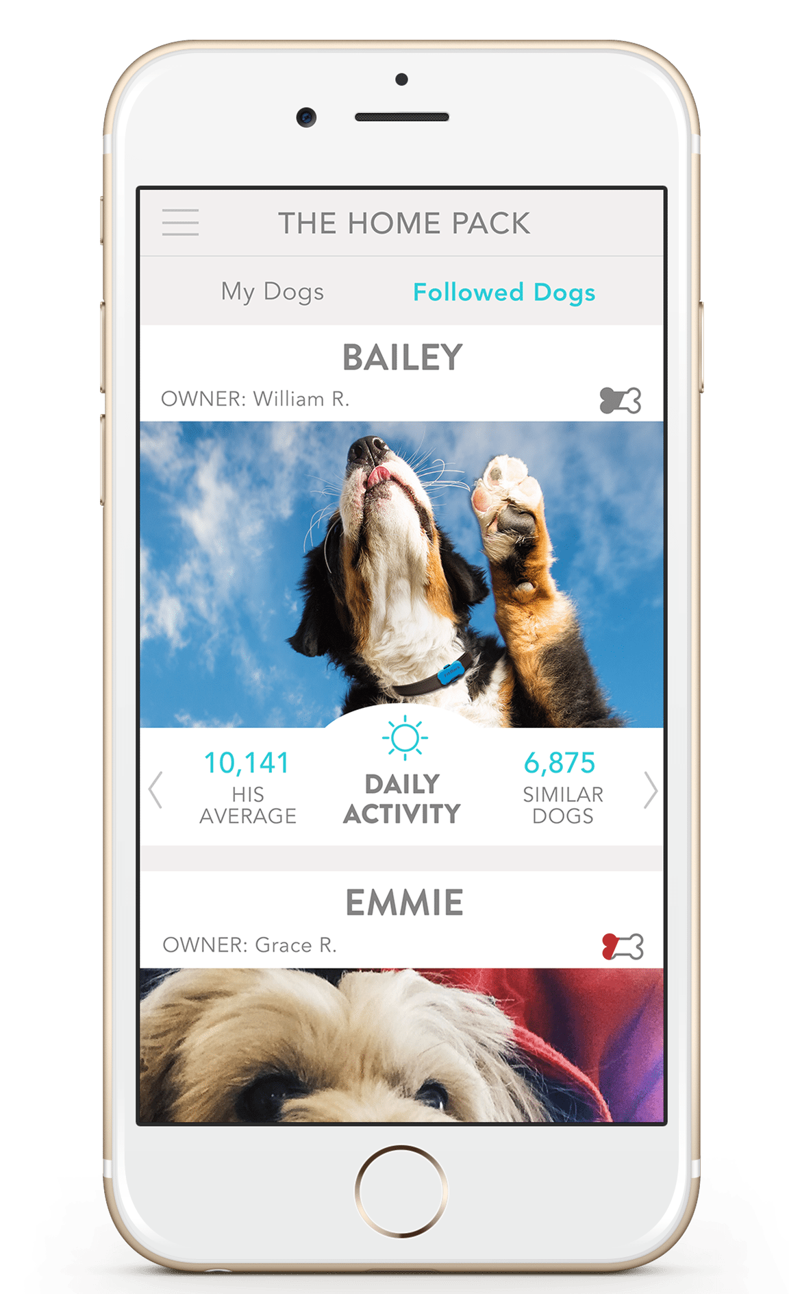 FitBark_DailyActivity_iPhone_Gold | Introducing TopDog Board and Similar Dogs Insights