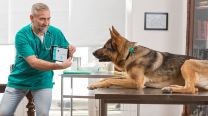 FitBark_Home_Medical_Insights