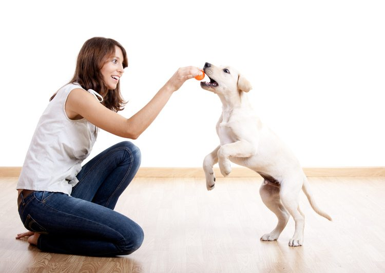 FitBark_Dog_Trainers | FitBark for Professionals