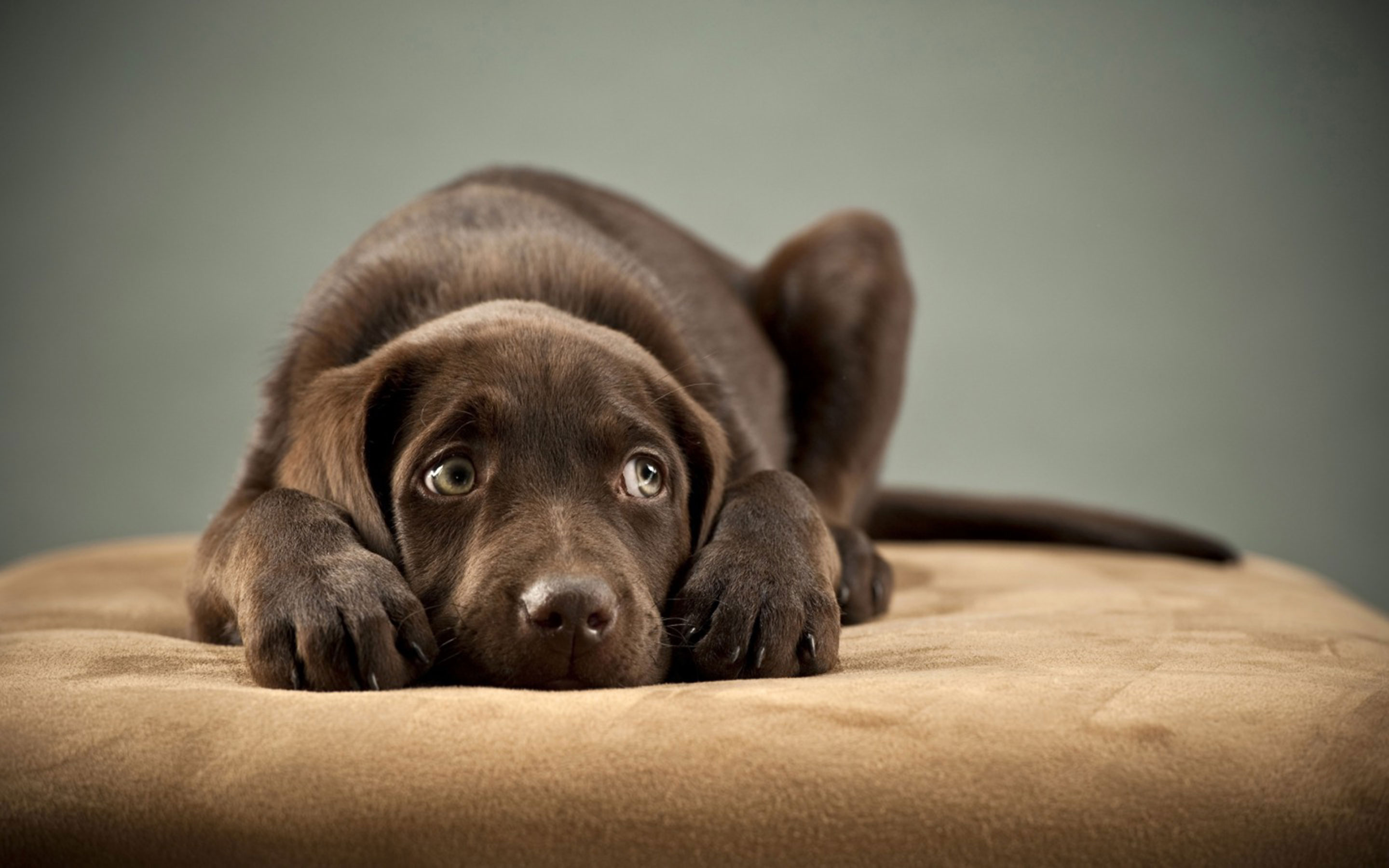 How do I know that my dog is sick or in pain? | FitBark