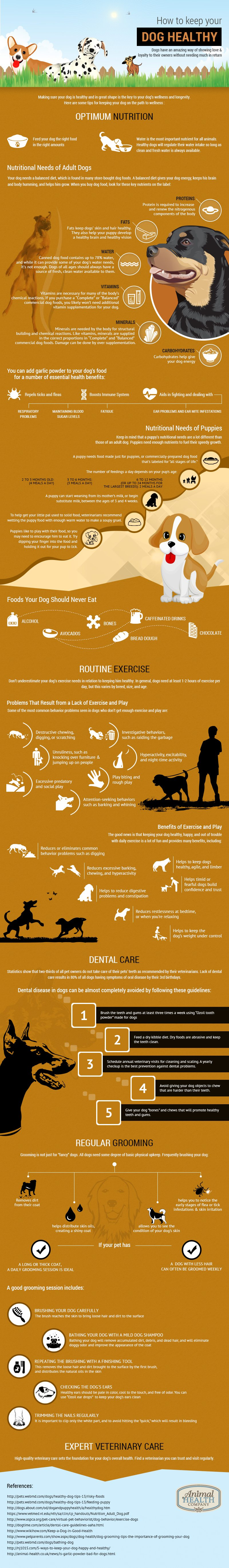 how-to-keep-your-dog-healthy   How Healthy is Your Dog?