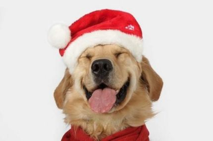 FitBark_Puppy_Christmas
