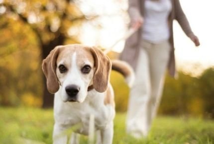 FitBark_JanUary_Your_Dog_Can_Help_You_To_Lose_Weight