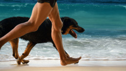 FitBark_Dog_Man_Running-uai-258x145 | How can I train my pup more effectively for dog sports?