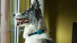 FitBark_Dog_Window-uai-258x145 | How can I train my pup more effectively for dog sports?