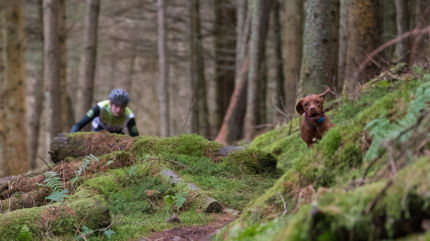 FitBark_Ruby_The_Trail_Dog_2015