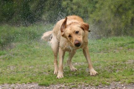 FitBark_Best_Rainy_Day_Dog_Games