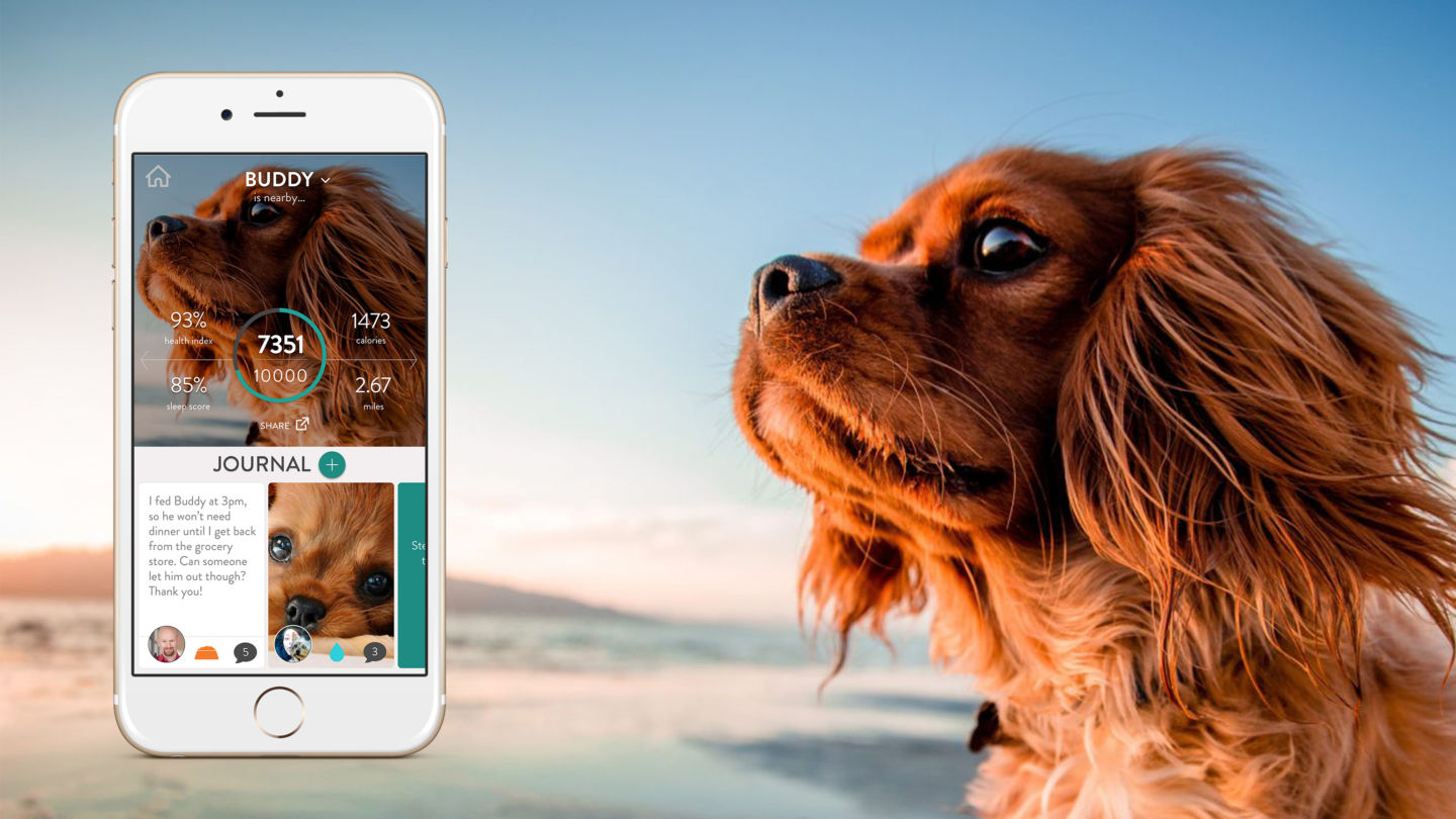 Fitbark Review - Screen