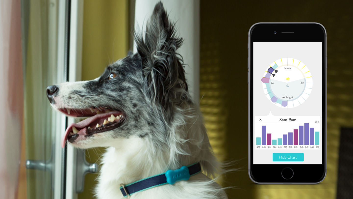 Fitbark Review - Monitor