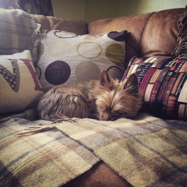 FitBark_sleepy_sleeping_yorkie | What Daily FitBark Goal Should I Set For My Dog?