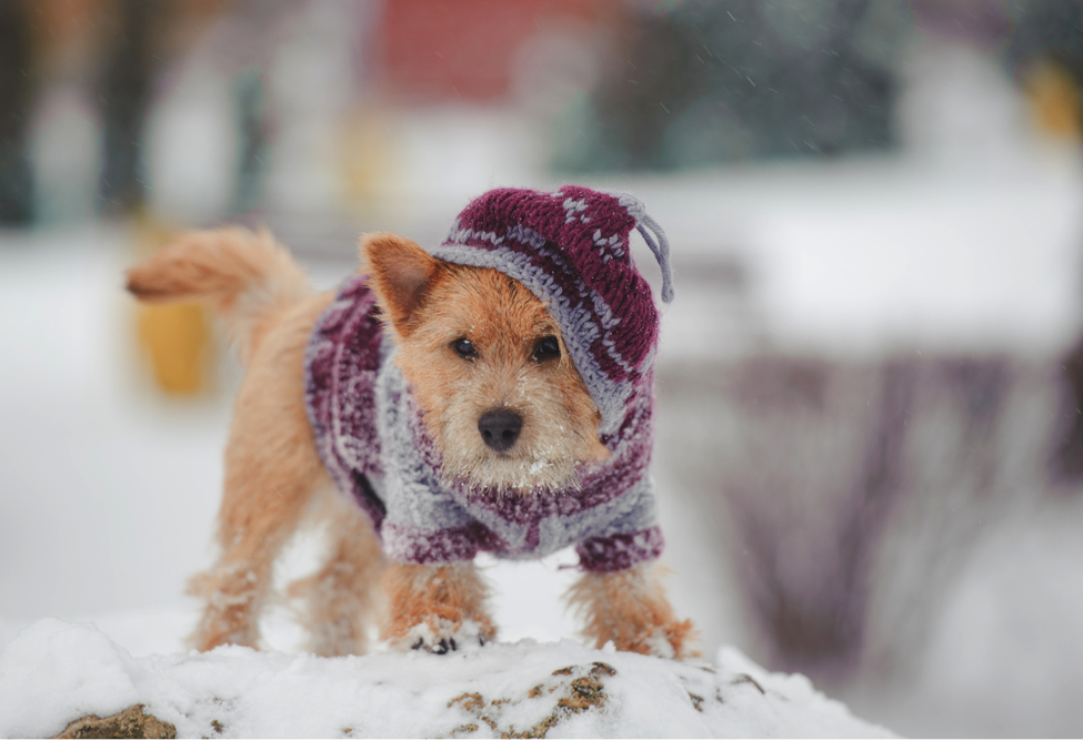 FitBark_winter_dog_snow | 3 Unusual, Overlooked, Yet Important Winter Dangers For Dogs