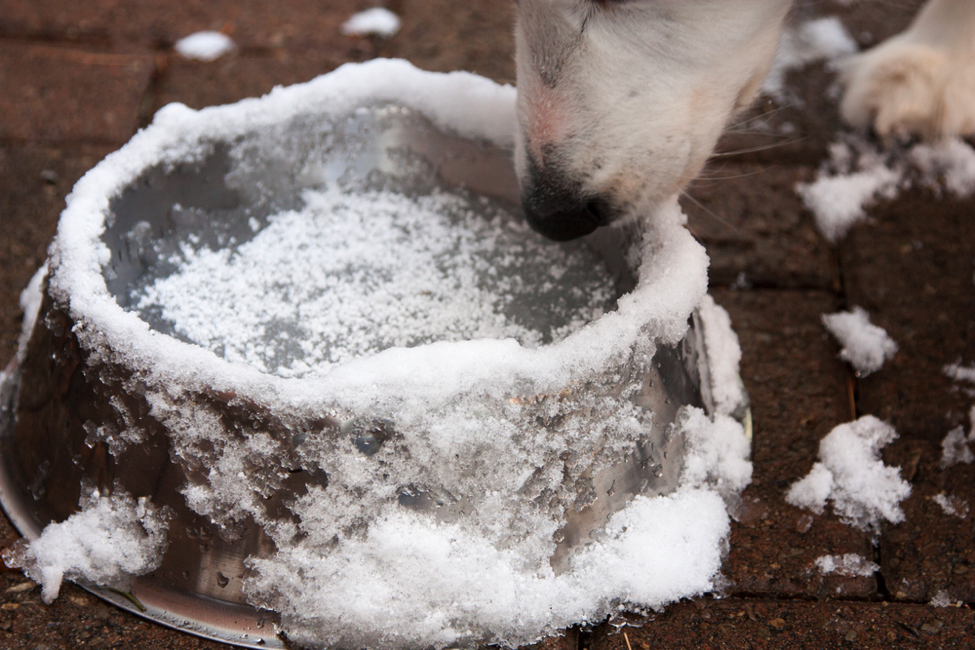 FitBark_water_ice_dog_winter | 3 Unusual, Overlooked, Yet Important Winter Dangers For Dogs