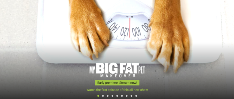 FitBark_AnimalPlanetGO-900x380 | FitBark and Animal Planet team up to launch My Big Fat Pet Makeover