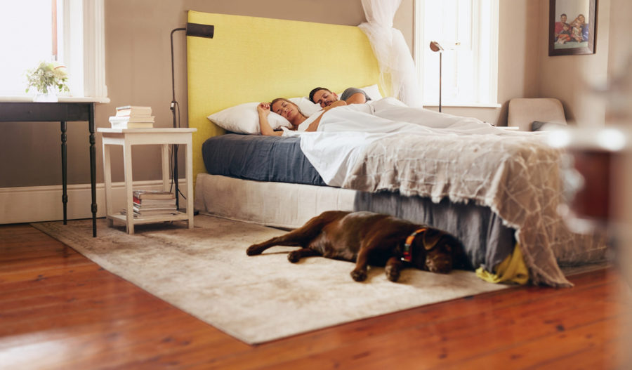 FitBark_Mayo_Clinic_Study_Dogs_Bedroom-900x527 | Mayo Clinic uses FitBark's activity monitors to show that dogs are good sleep companions