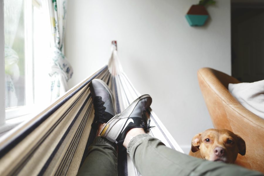 FitBark_bigdog_small_space1-900x600 | Tips to Make Your Big Dog Comfortable in a Small Flat