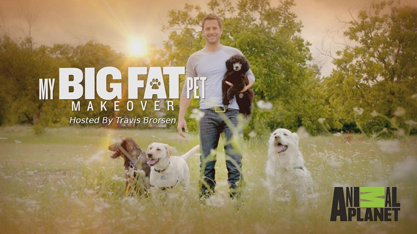 Fitbark Review - My Pet