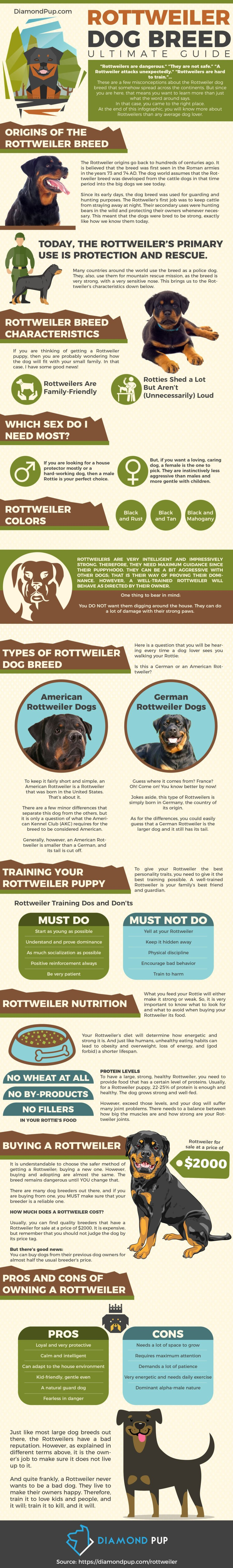 FitBark_Diamond_Pup_Rottweiler_Info-900x6054 | Rottweiler Dog Breed: A Great Family Protector