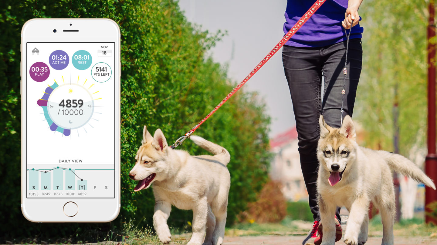 Fitbark Review - Walking