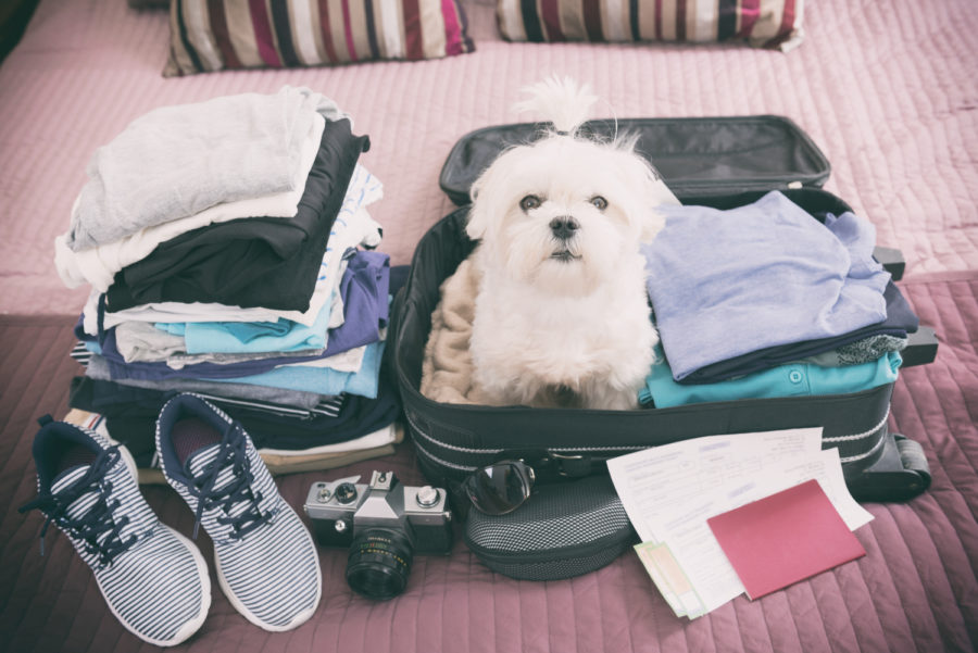FitBark_dog_luggage_travel-900x601 | How to Prepare Your Dog for Air Travel