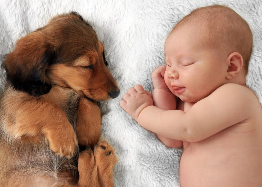 FitBark_baby_arrival-900x643 | 4 Tips To Prep Your Pet For Baby's Arrival