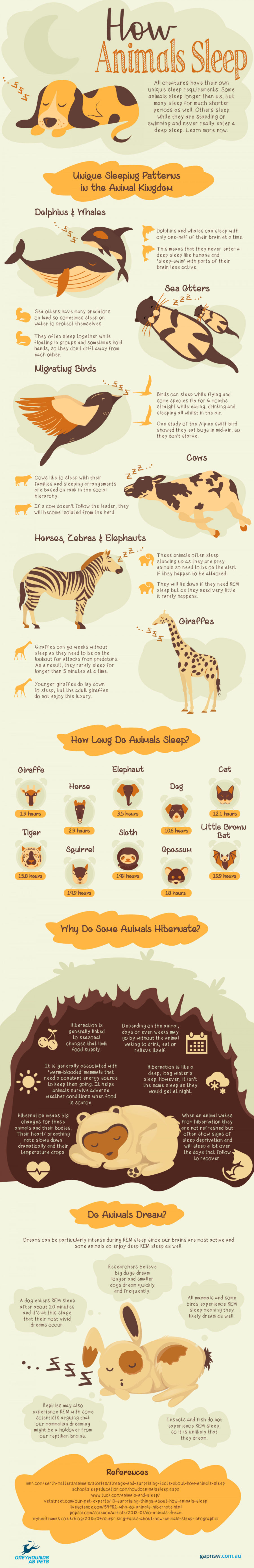 Animal-Sleeping-Habits-Explored-900x5558 | Animal Sleeping Habits Explored