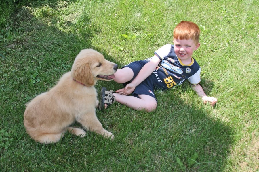 FitBark_boy_kid_golden-900x600 | Important Tips for Dog Owners with Kids