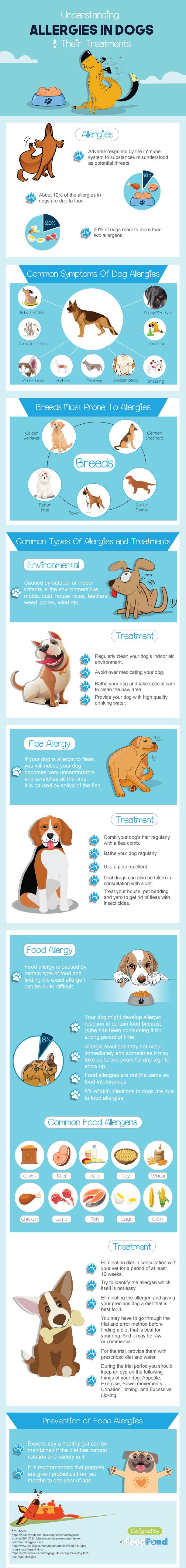 Dog-allergy-infographic | Allergies In Dogs: Triggers, Symptoms, And Treatments