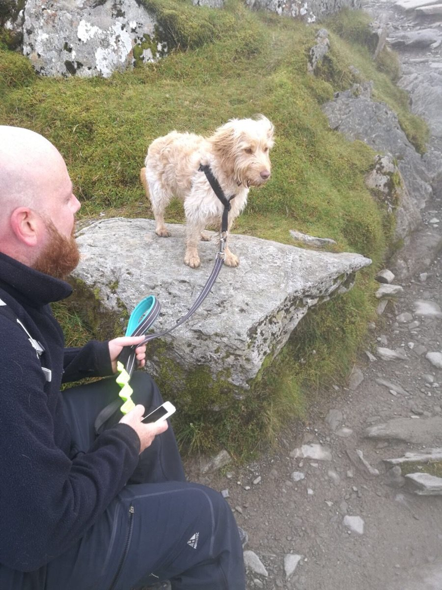 FitBark_snowdon_cockapoo_5-900x1200 | When Luna And I Took On Mount Snowdon!
