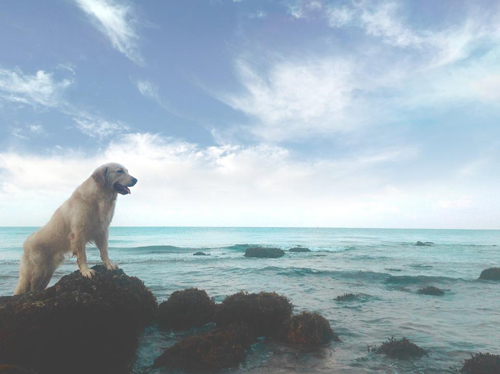 In-Ly-Son |   5 Beaches You Should Go To With Your Dog In Vietnam