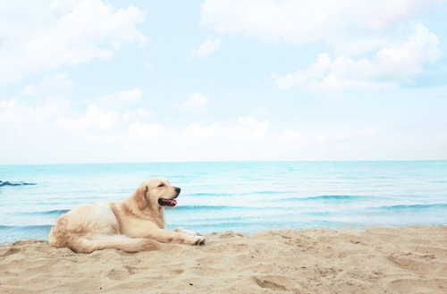 In-My-Khe |   5 Beaches You Should Go To With Your Dog In Vietnam