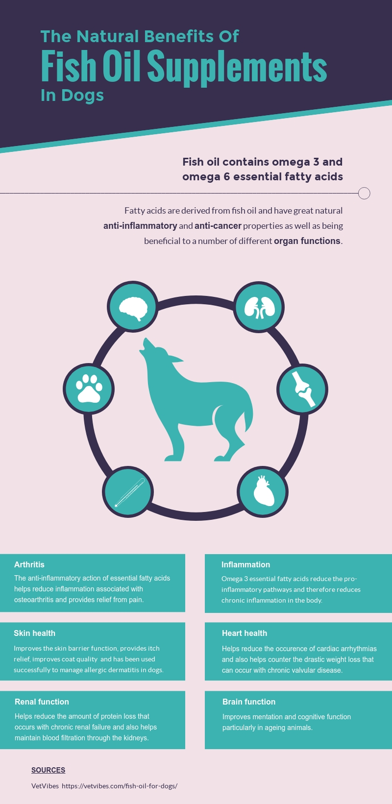 FitBark_Fish_Oil_infographic | The Natural Benefits of Fish Oil Supplements In Dogs