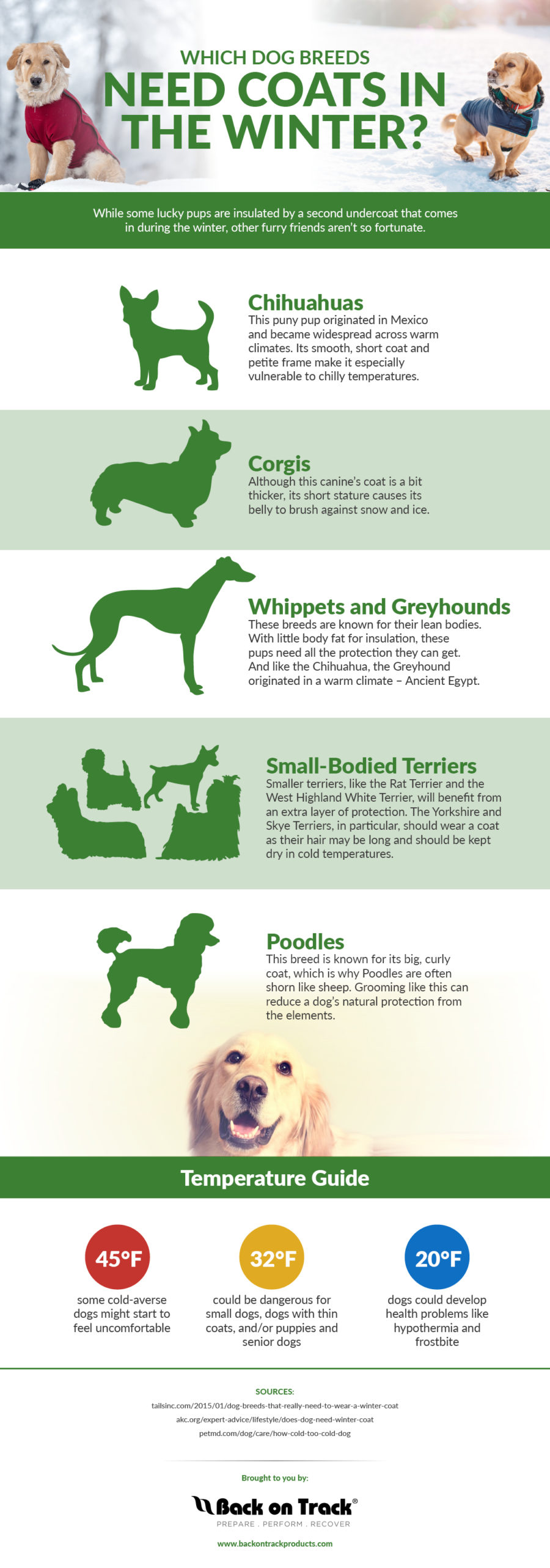 FitBark_infographic_dog_coats-900x2564 | Which Dog Breeds Need Coats In The Winter?