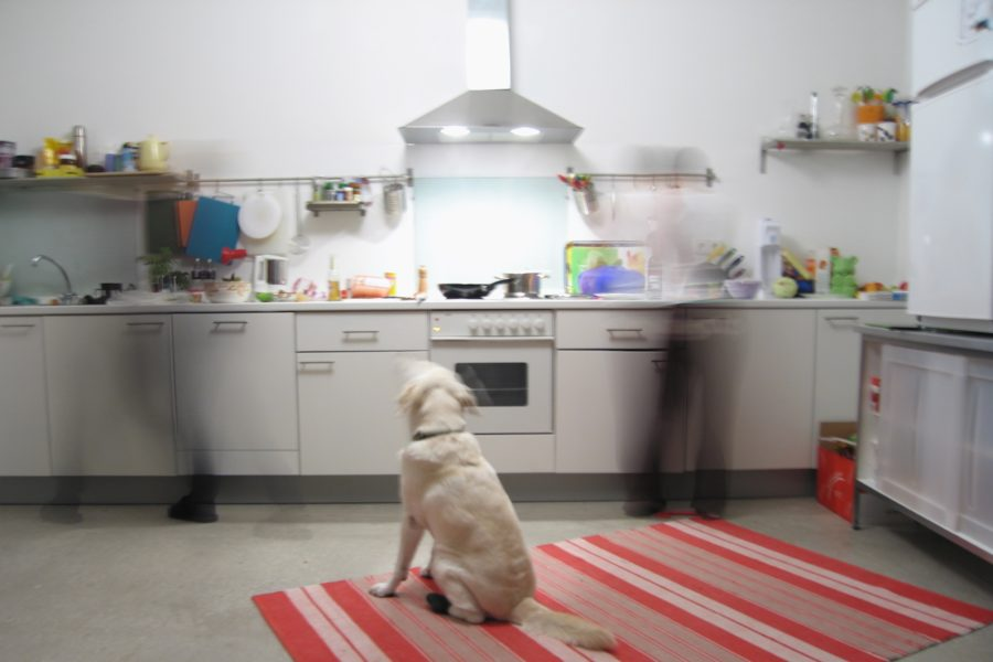 FitBark_dog_kitchen-900x600 | How to Design and Maintain a Pet-Friendly Kitchen