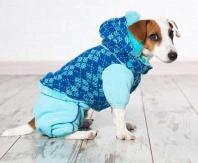 FitBark_dog_clothes_jacket | 6 DIY Clothing & Accessory Ideas for Your Pooch