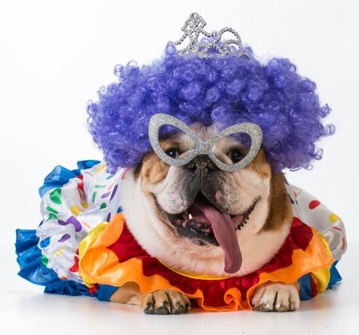 FitBark_dog_clown_costume | 6 DIY Clothing & Accessory Ideas for Your Pooch