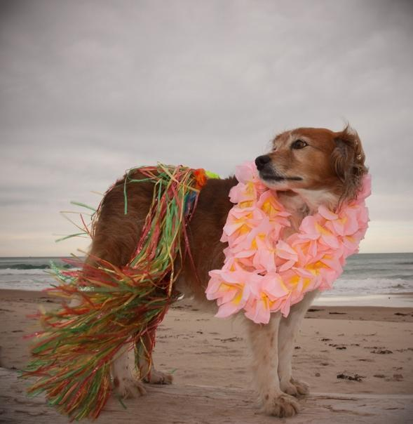 FitBark_dog_costume_beach | 6 DIY Clothing & Accessory Ideas for Your Pooch