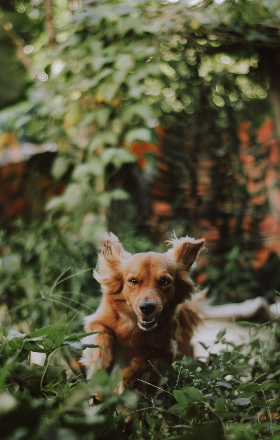 FitBark_dog_running_plants-900x1414 | Top 10 Safe Plants for Dogs You Can Add to Almost Any Garden Right Now