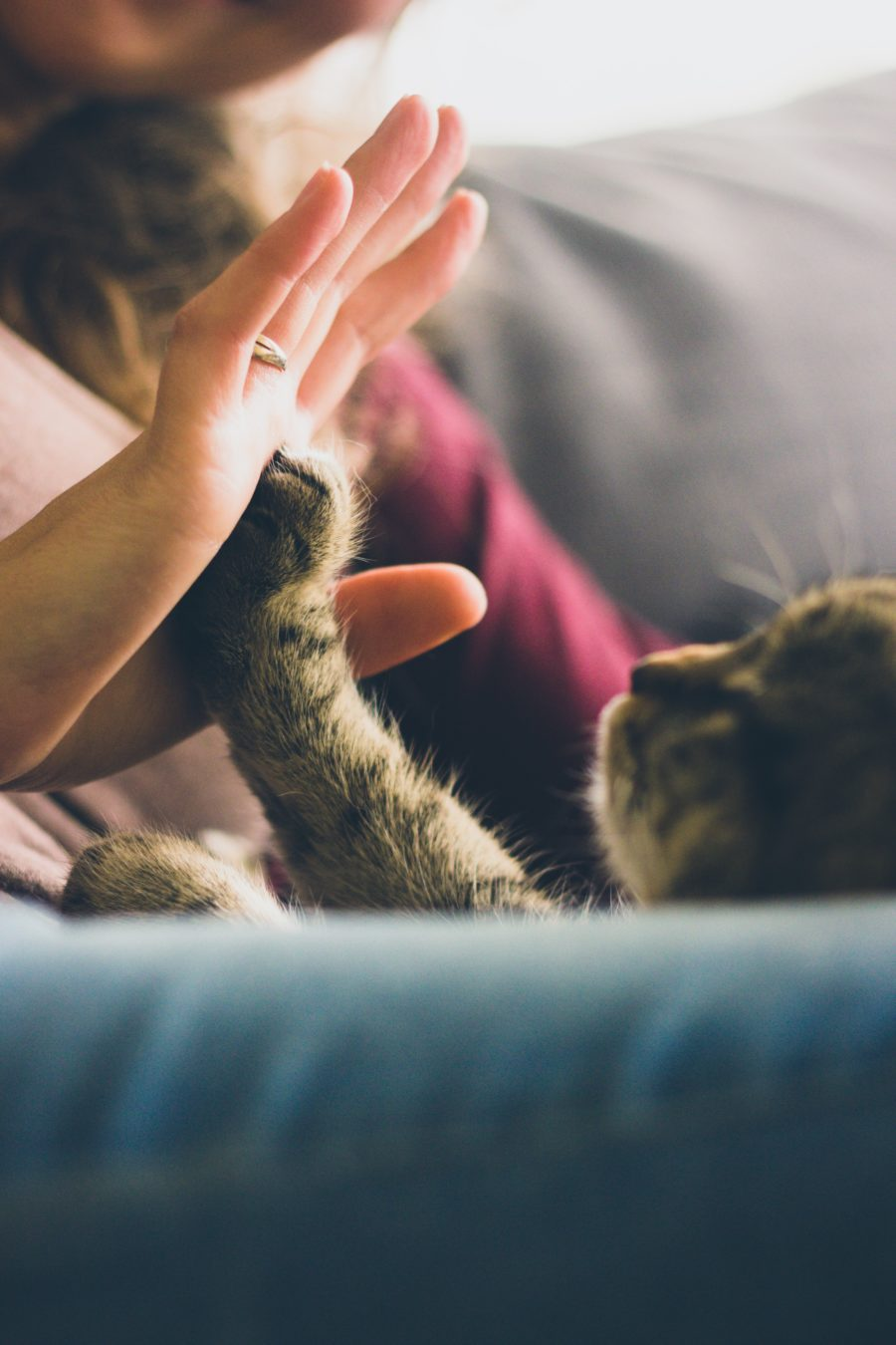 FitBark_cat_high_five-900x1350 | How To Make Your Home More Pet Friendly