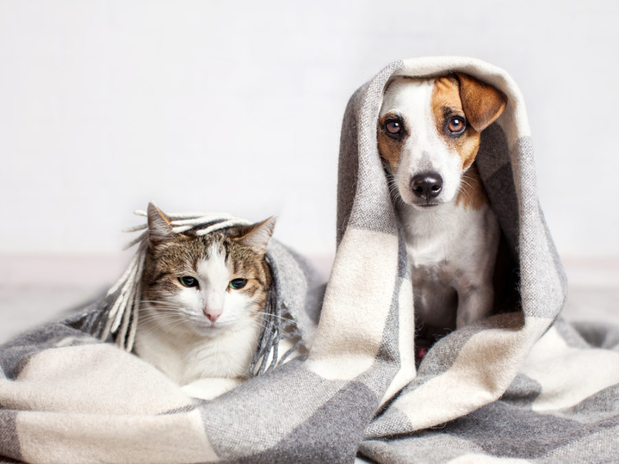 FitBark_dog_cat_blankets-900x675 | How to Keep Your Pets Cool in the Summer