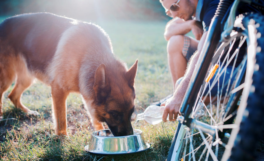 FitBark_dog_outside_grass-900x549 | How to Keep Your Pets Cool in the Summer
