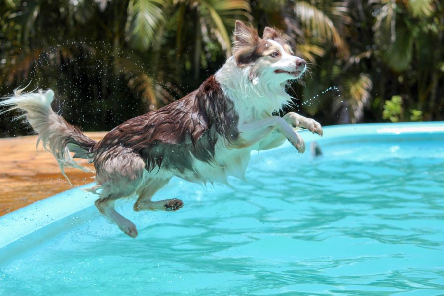 FitBark_dog_pool-900x600 | How to Convince Your Dog to go Out in the Rain