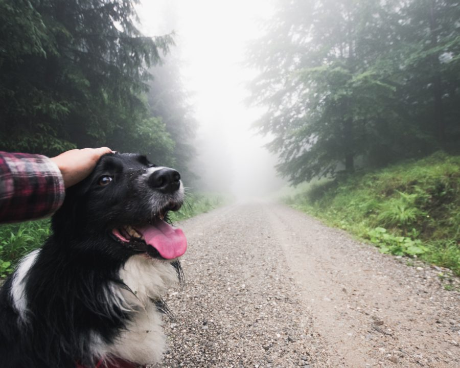 FitBark_dog_road_gravel-900x720 | How to Convince Your Dog to go Out in the Rain