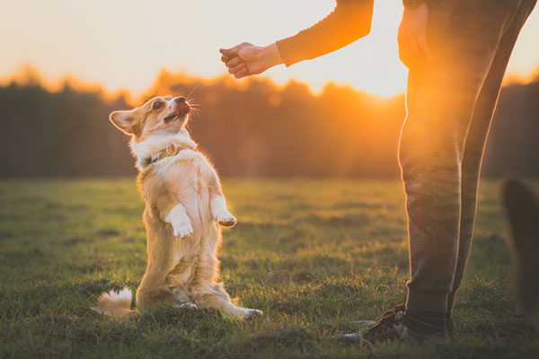 FitBark_dog_field | Building A Bond With A Pet Dog Will Last You A Lifetime