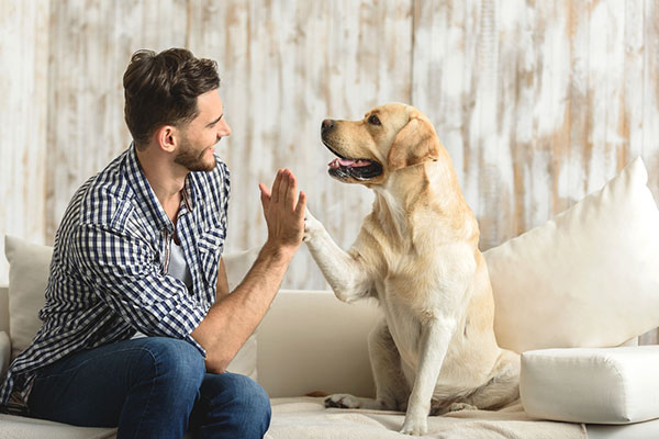 FitBark_man_golden_bed | Building A Bond With A Pet Dog Will Last You A Lifetime