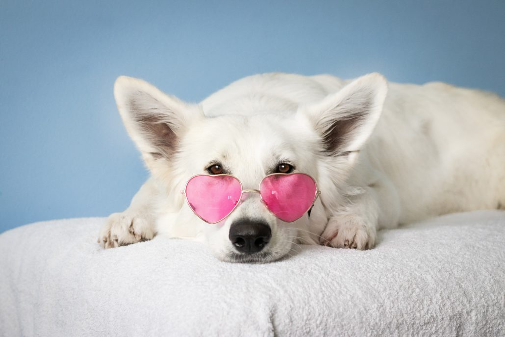 FitBark_white_dog_sunglasses-1030x687 | Separation Anxiety: How to Keep Your Dog Calm