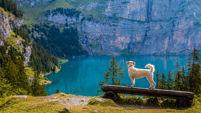 FitBark_small_dog_log_lake | Tips & Tricks for Traveling With Your Dog