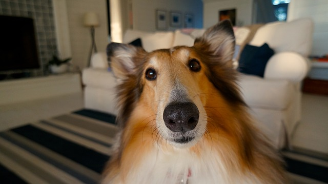FIitBark_dog_couch_clean | Getting A Second Dog? Be Ready For Something Different