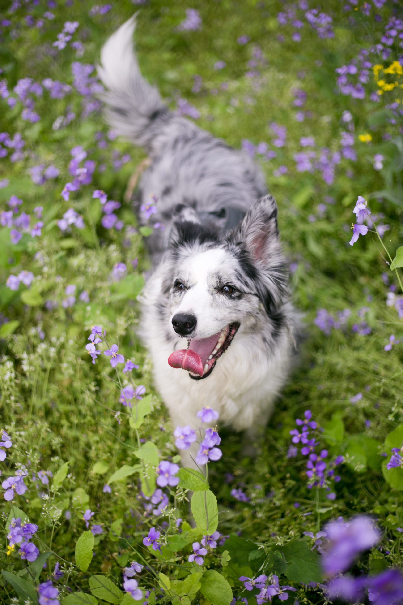 10 Flowers Safe For Dogs Fitbark